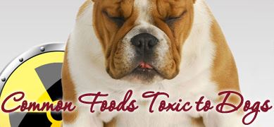 Common Foods Toxic to Dogs